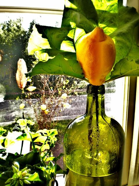 Rabarber & Citron